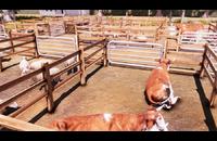 Real Farm (US) (Xbox One)
